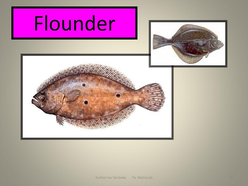 Katherine Verbeke Pa Wetlands39 Flounder