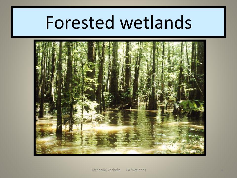 Katherine Verbeke Pa Wetlands4 Forested wetlands