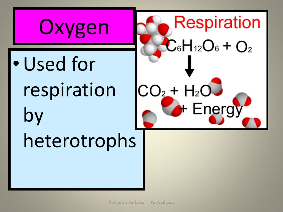 Katherine Verbeke Pa Wetlands44 Oxygen Used for respiration by heterotrophs