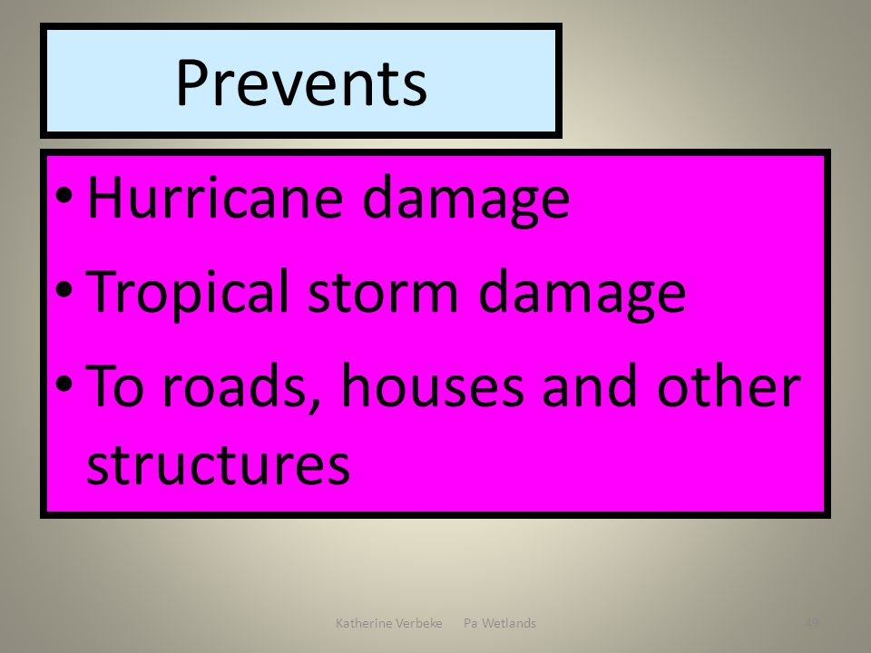 Katherine Verbeke Pa Wetlands49 Prevents Hurricane damage Tropical storm damage To roads, houses and other structures