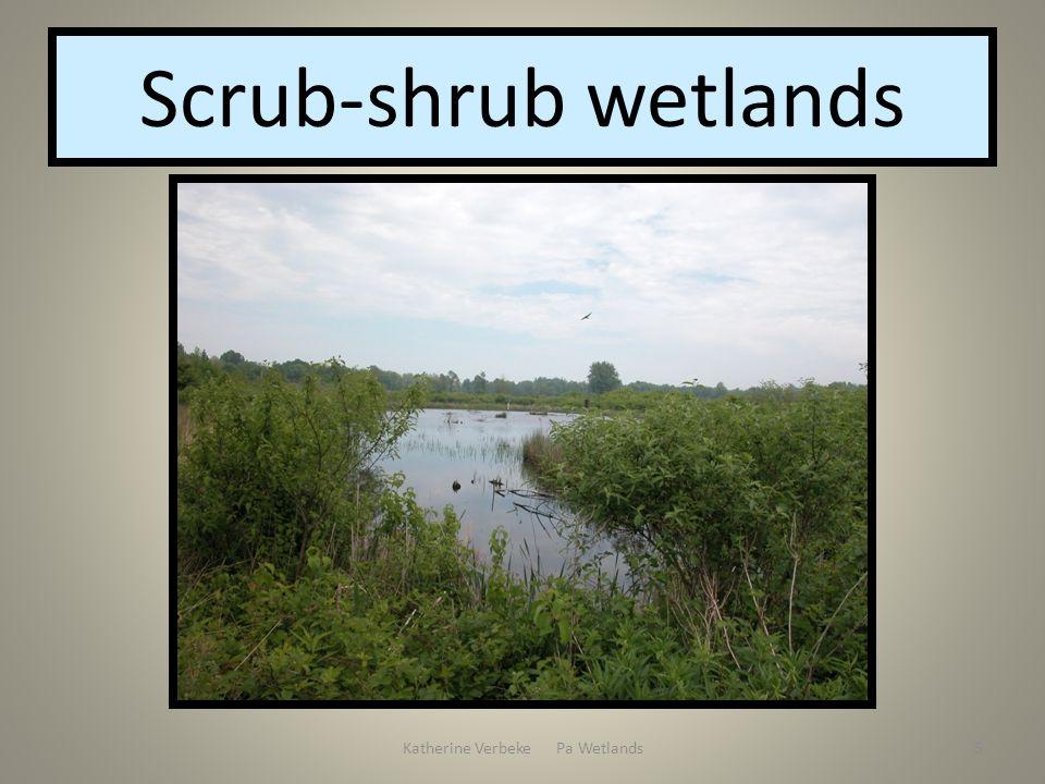 Katherine Verbeke Pa Wetlands5 Scrub-shrub wetlands