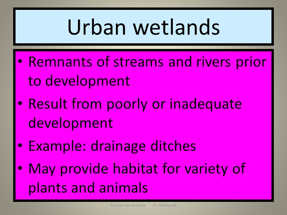 Katherine Verbeke Pa Wetlands57 Urban wetlands Remnants of streams and rivers prior to development Result from poorly or inadequate development Exampl