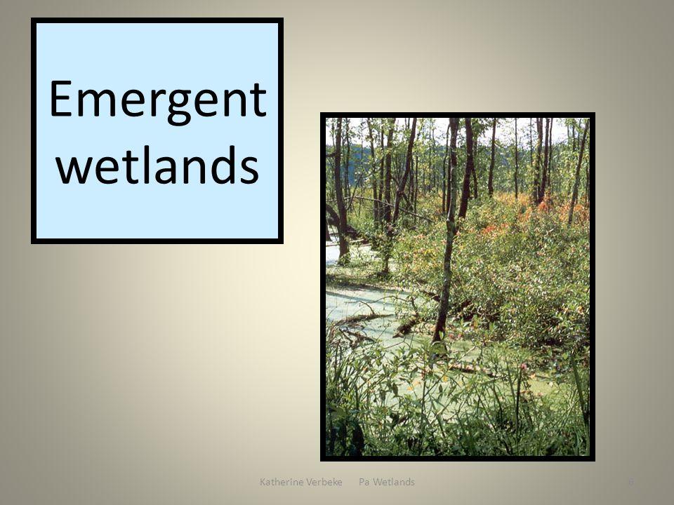 Katherine Verbeke Pa Wetlands6 Emergent wetlands