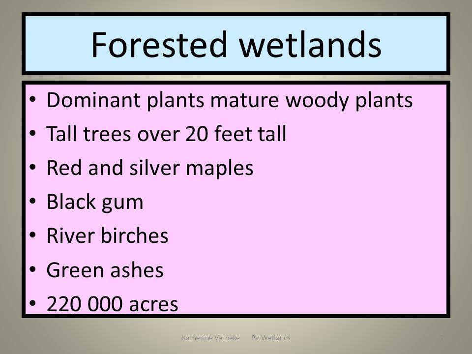 Katherine Verbeke Pa Wetlands7 Forested wetlands Dominant plants mature woody plants Tall trees over 20 feet tall Red and silver maples Black gum Rive
