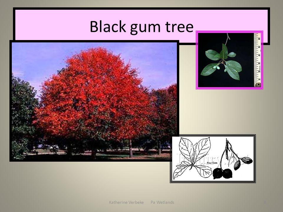 Katherine Verbeke Pa Wetlands8 Black gum tree
