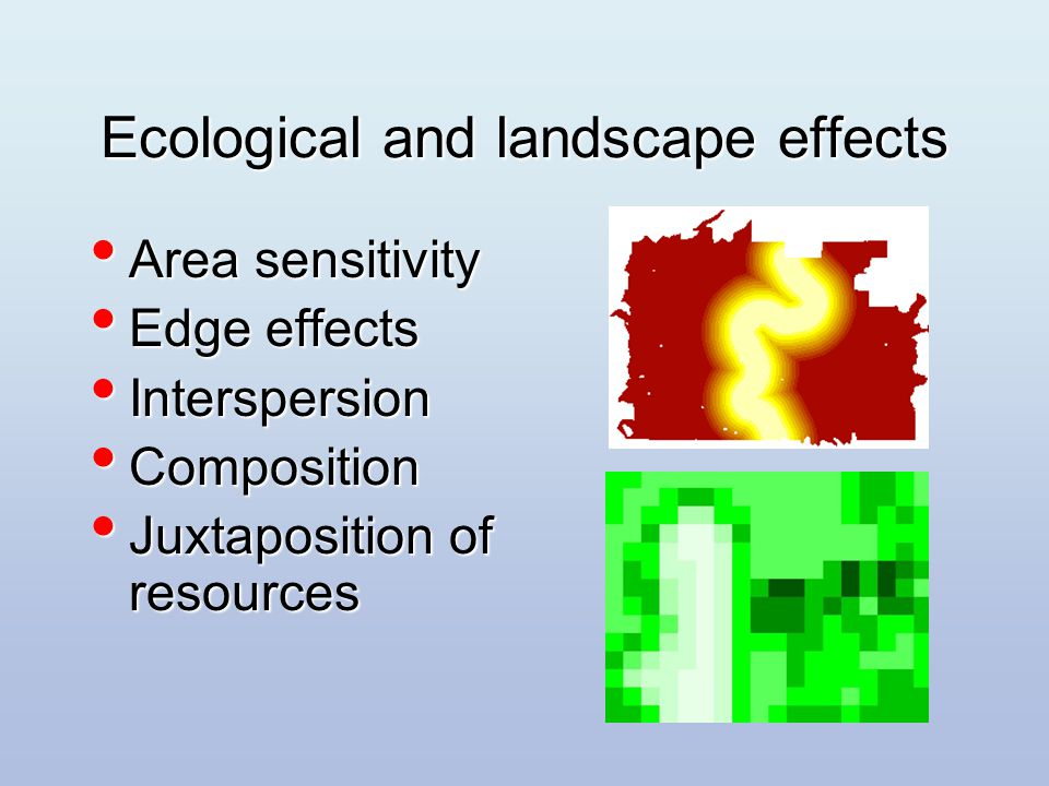 Ecological and landscape effects Area sensitivity Area sensitivity Edge effects Edge effects Interspersion Interspersion Composition Composition Juxtaposition of resources Juxtaposition of resources