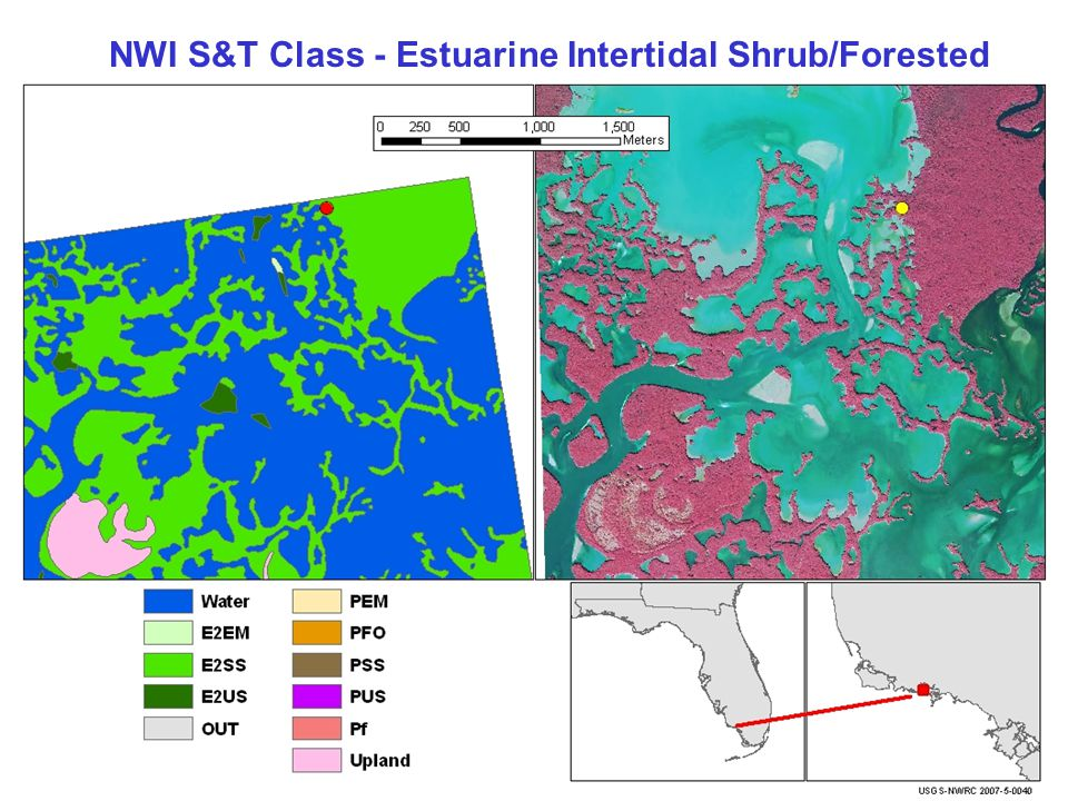NWI S&T Class - Estuarine Intertidal Shrub/Forested