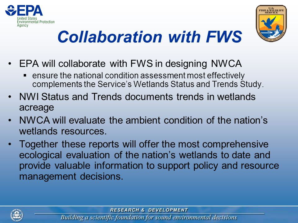 Collaboration with FWS EPA will collaborate with FWS in designing NWCA  ensure the national condition assessment most effectively complements the Service's Wetlands Status and Trends Study.