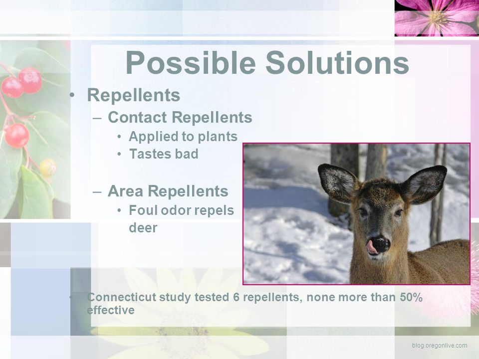 Possible Solutions Repellents –Contact Repellents Applied to plants Tastes bad –Area Repellents Foul odor repels deer Connecticut study tested 6 repellents, none more than 50% effective blog.oregonlive.com