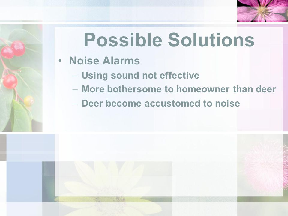 Possible Solutions Noise Alarms –Using sound not effective –More bothersome to homeowner than deer –Deer become accustomed to noise