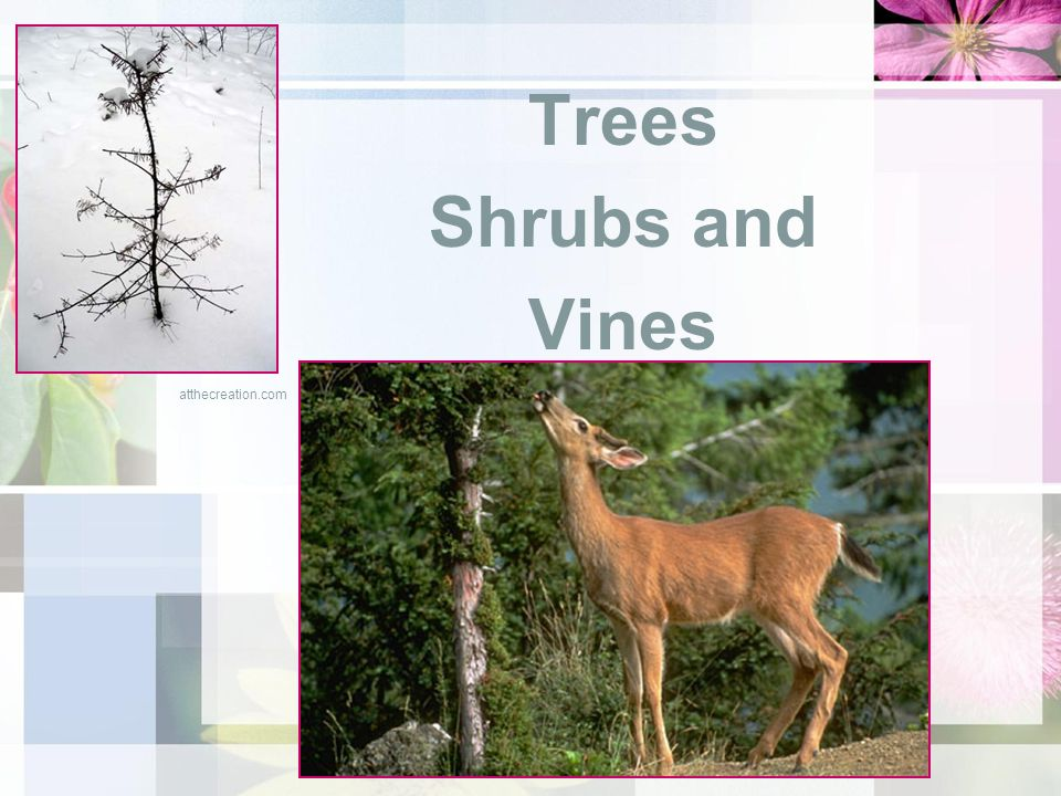 Trees Shrubs and Vines atthecreation.com