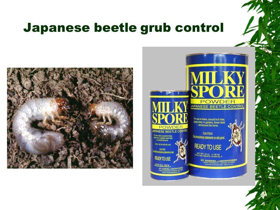 Japanese beetle grub control
