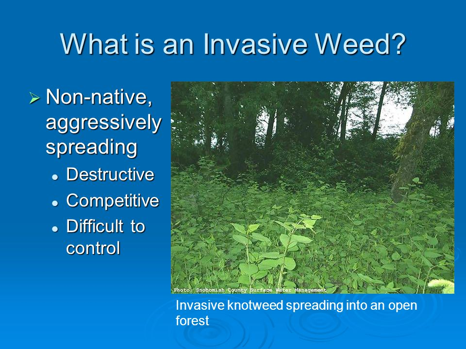What is an Invasive Weed.
