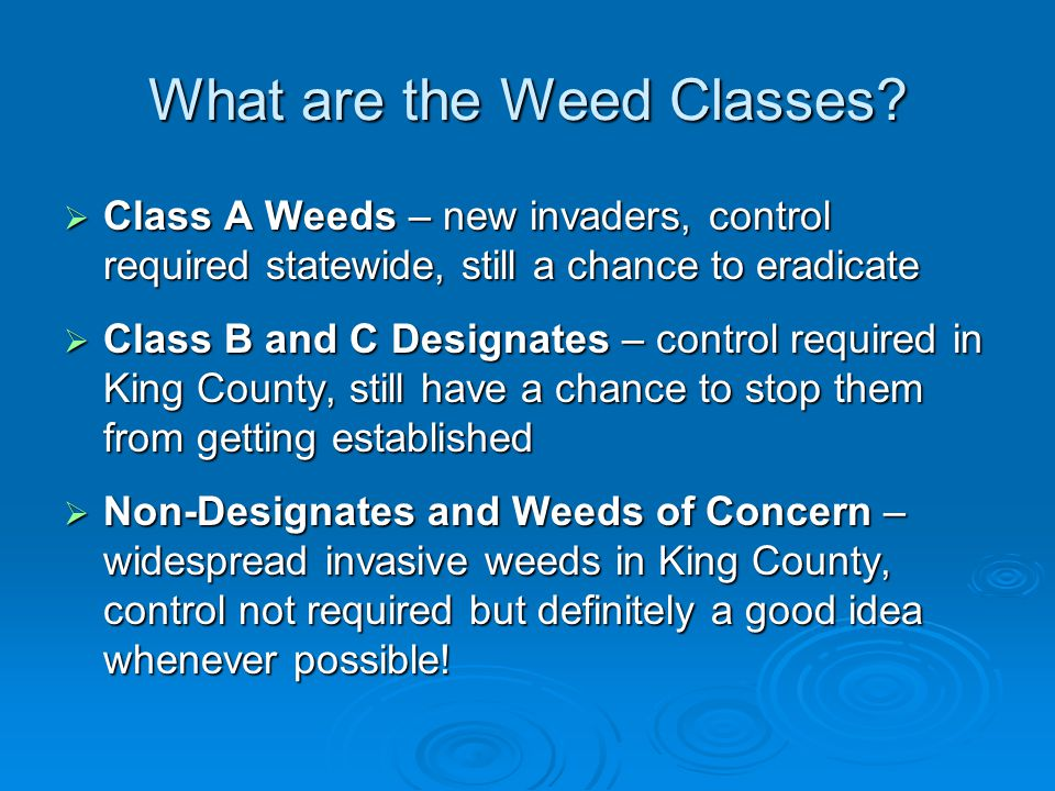 What are the Weed Classes.