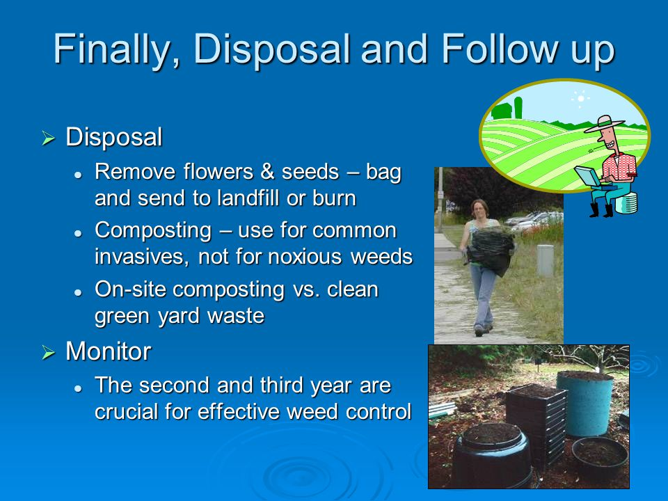 Finally, Disposal and Follow up  Disposal Remove flowers & seeds – bag and send to landfill or burn Remove flowers & seeds – bag and send to landfill or burn Composting – use for common invasives, not for noxious weeds Composting – use for common invasives, not for noxious weeds On-site composting vs.