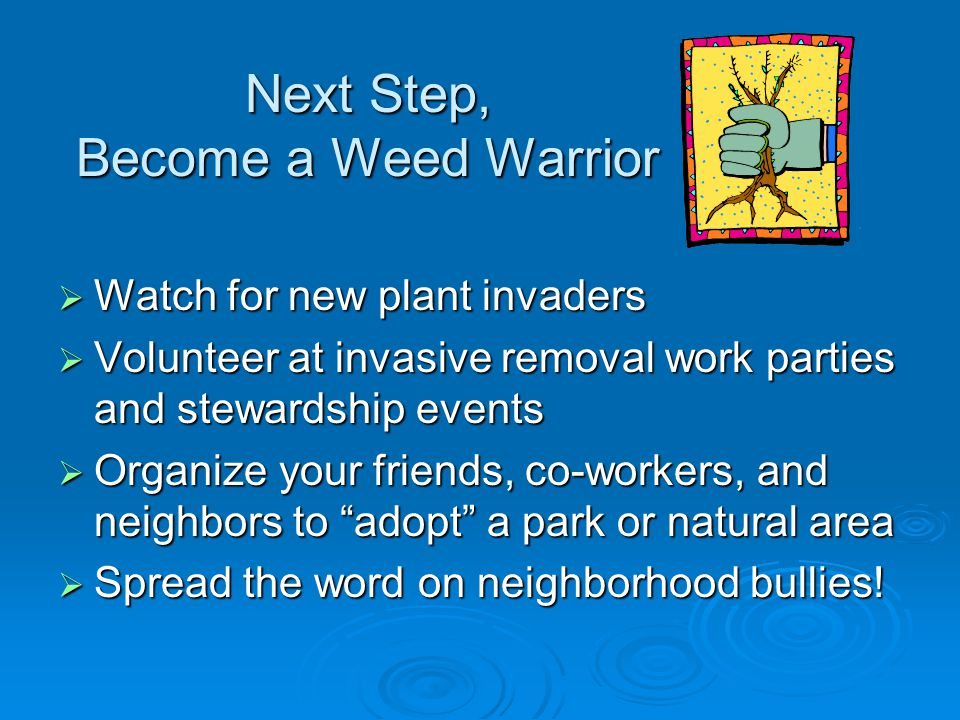 Next Step, Become a Weed Warrior  Watch for new plant invaders  Volunteer at invasive removal work parties and stewardship events  Organize your friends, co-workers, and neighbors to adopt a park or natural area  Spread the word on neighborhood bullies!