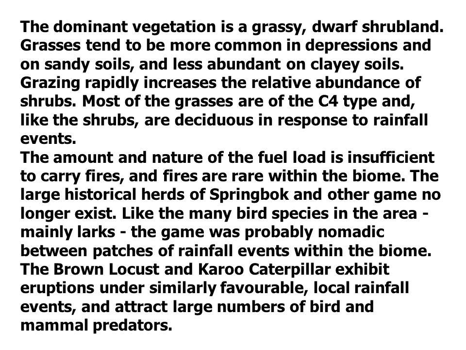 The dominant vegetation is a grassy, dwarf shrubland.