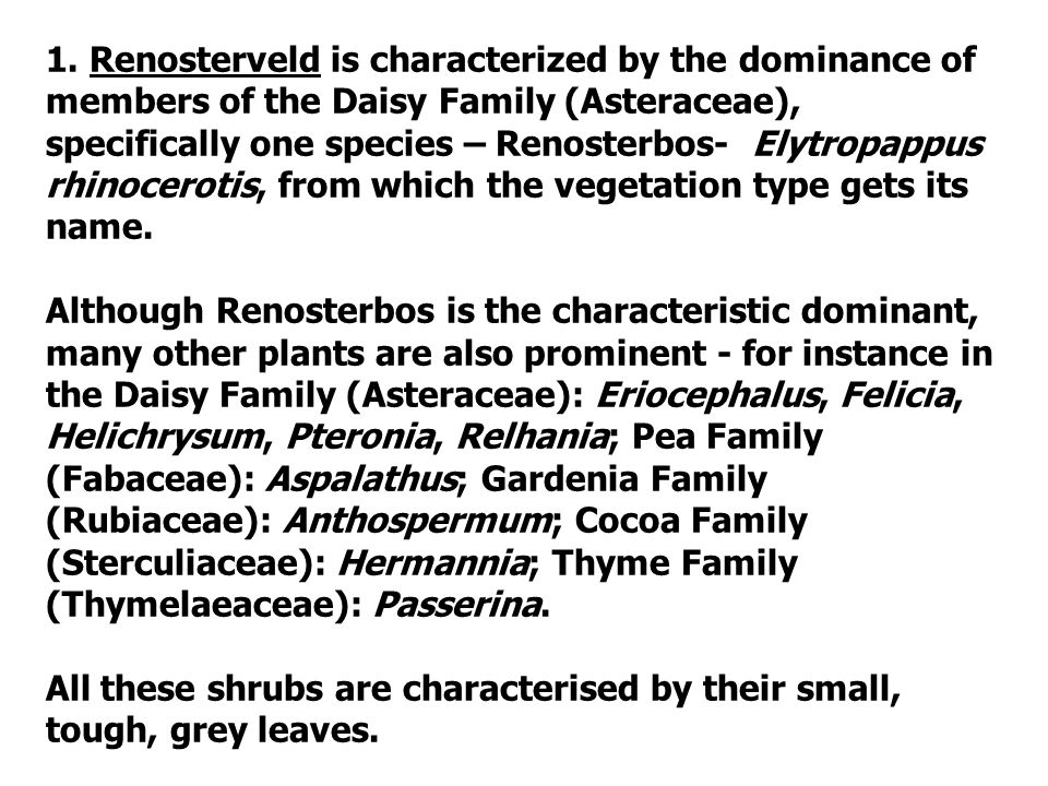 1. Renosterveld is characterized by the dominance of members of the Daisy Family (Asteraceae), specifically one species – Renosterbos- Elytropappus rh