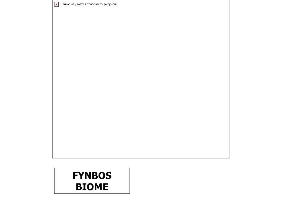 FYNBOS BIOME
