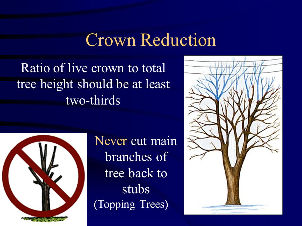 Crown Reduction Ratio of live crown to total tree height should be at least two-thirds Never cut main branches of tree back to stubs (Topping Trees)