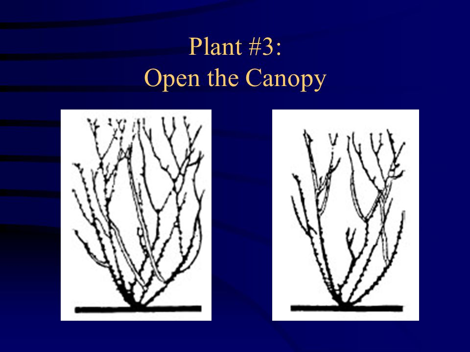 Plant #3: Open the Canopy