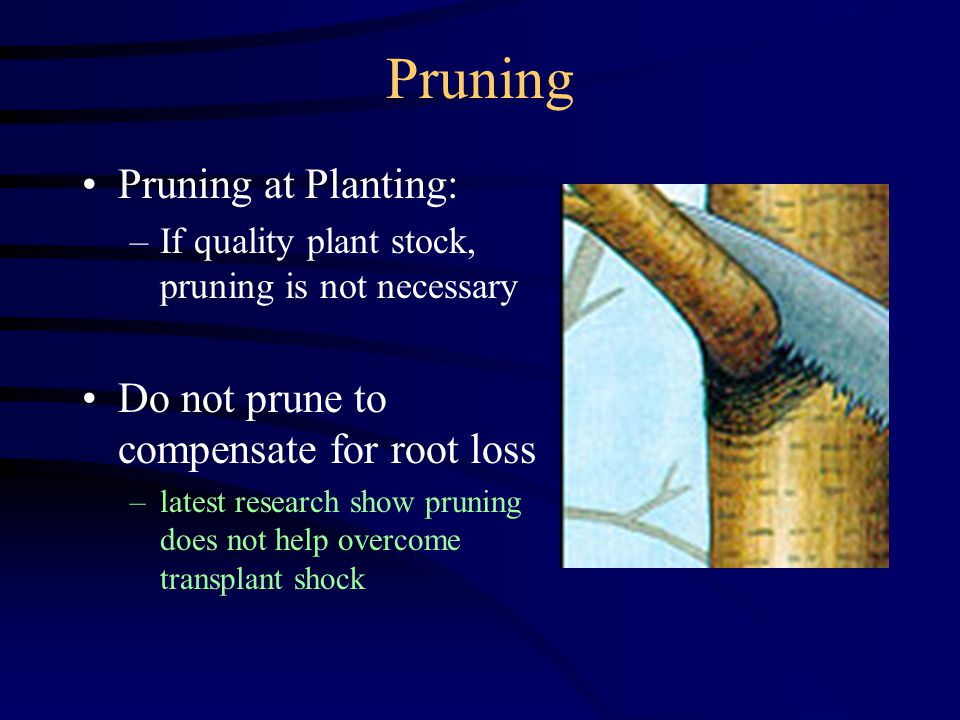 Pruning Pruning at Planting: –If quality plant stock, pruning is not necessary Do not prune to compensate for root loss –latest research show pruning does not help overcome transplant shock