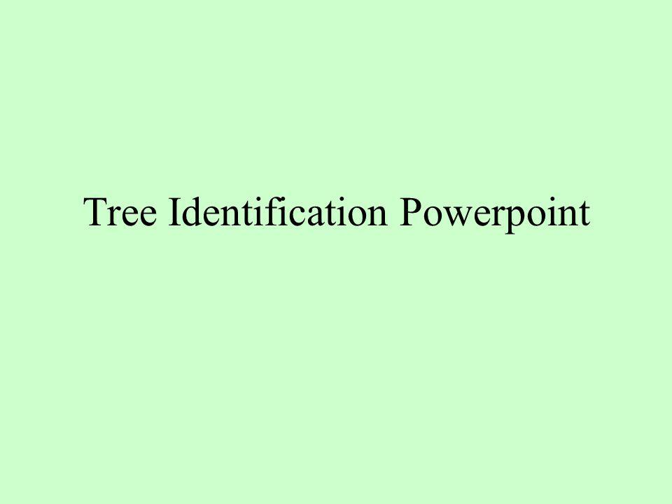 Tree Identification Powerpoint