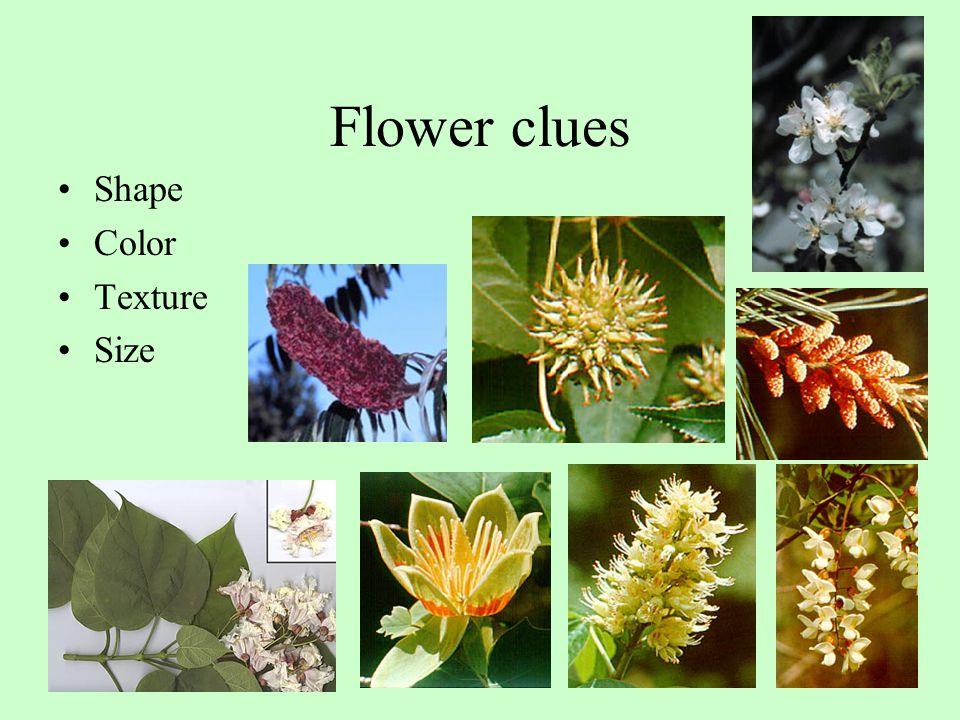 Flower clues Shape Color Texture Size