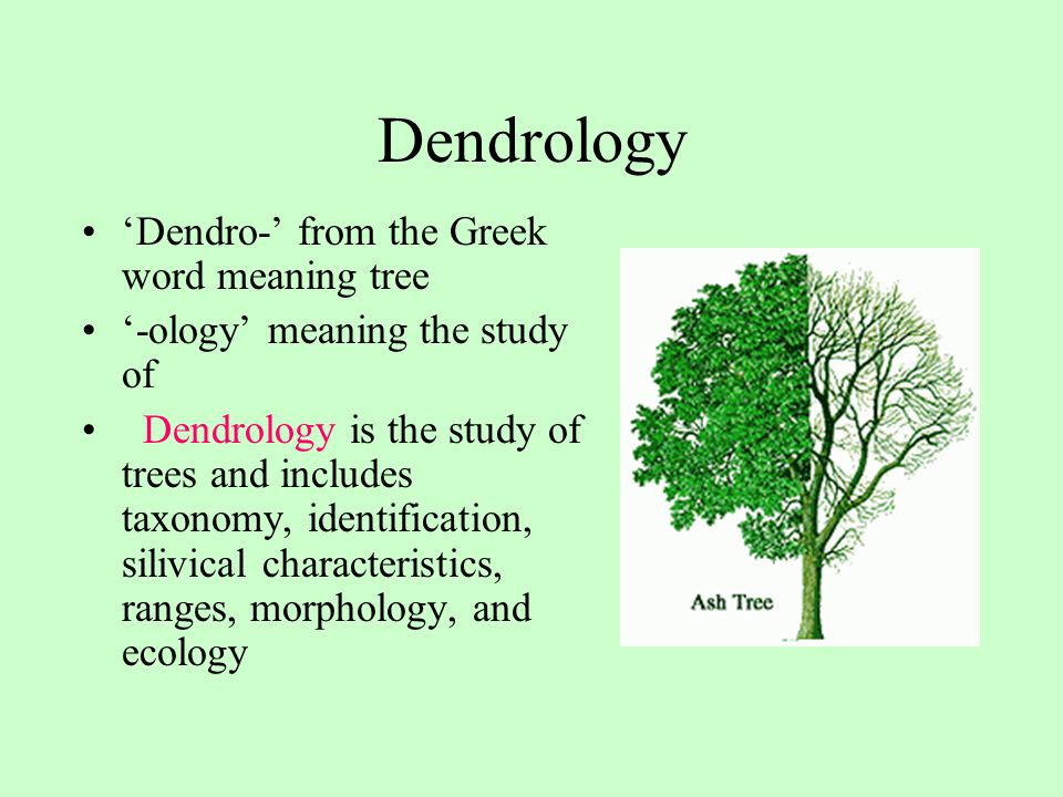 Dendrology 'Dendro-' from the Greek word meaning tree '-ology' meaning the study of Dendrology is the study of trees and includes taxonomy, identifica