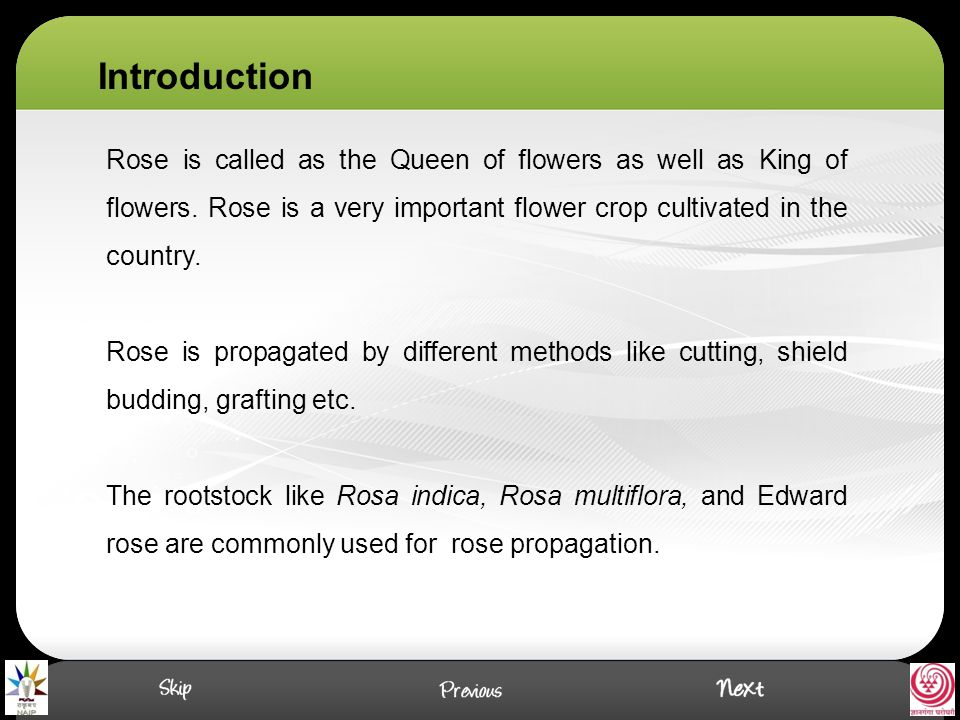 Rose is called as the Queen of flowers as well as King of flowers.