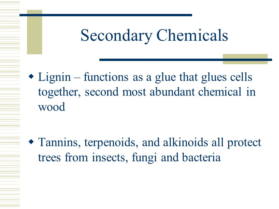 Secondary Chemicals  Lignin – functions as a glue that glues cells together, second most abundant chemical in wood  Tannins, terpenoids, and alkinoids all protect trees from insects, fungi and bacteria