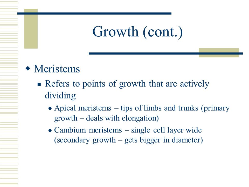 Growth (cont.)  Meristems Refers to points of growth that are actively dividing Apical meristems – tips of limbs and trunks (primary growth – deals with elongation) Cambium meristems – single cell layer wide (secondary growth – gets bigger in diameter)