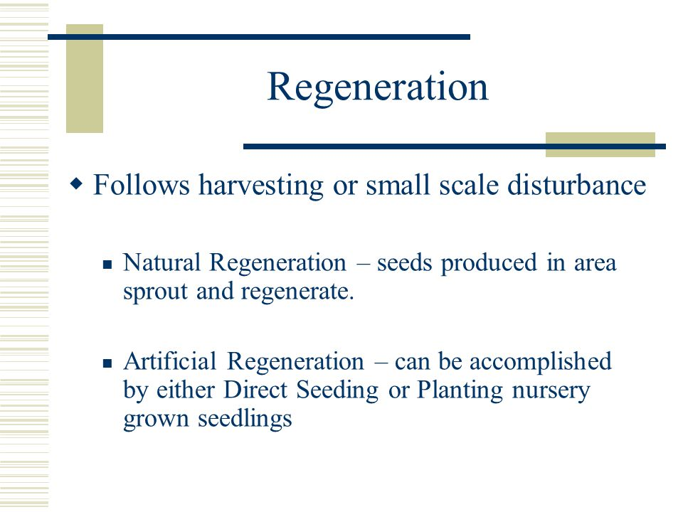 Regeneration  Follows harvesting or small scale disturbance Natural Regeneration – seeds produced in area sprout and regenerate.