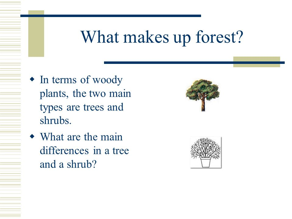 What makes up forest.  In terms of woody plants, the two main types are trees and shrubs.