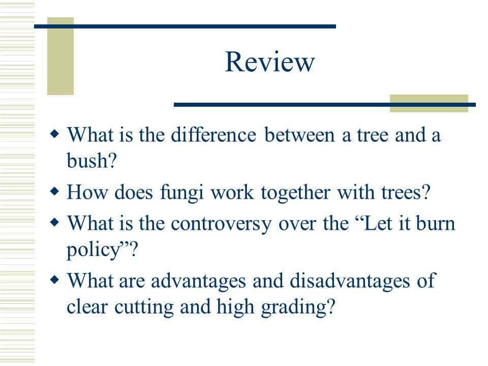 Review  What is the difference between a tree and a bush.