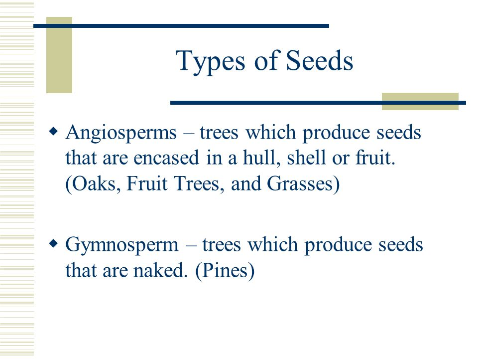 Types of Seeds  Angiosperms – trees which produce seeds that are encased in a hull, shell or fruit.
