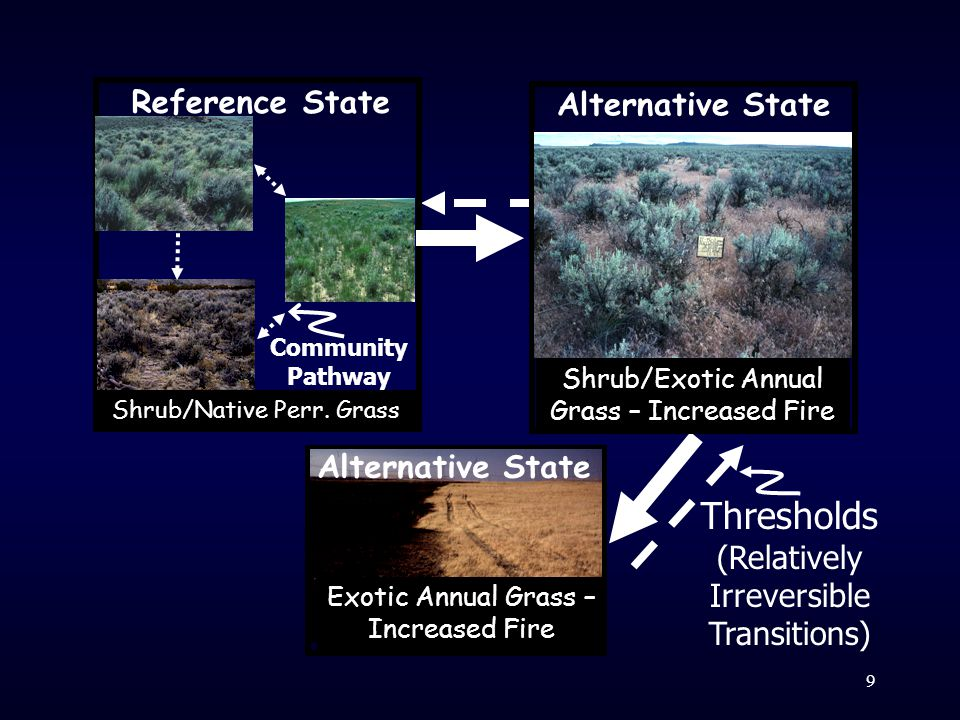 Thresholds (Relatively Irreversible Transitions) Community A Community Pathway Reference State Shrub/Native Perr.