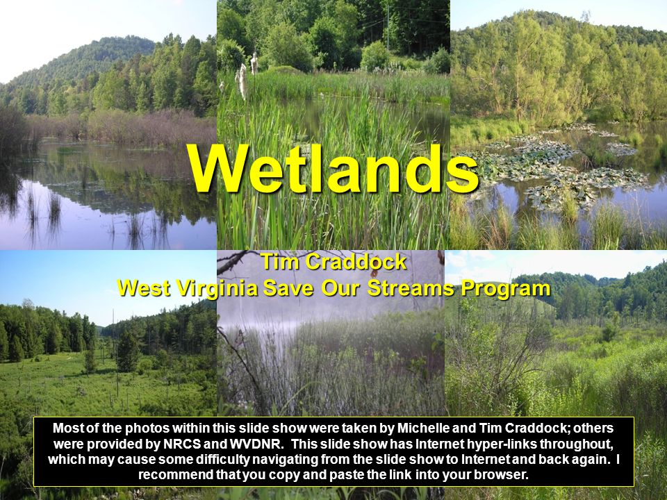 Wetlands Tim Craddock West Virginia Save Our Streams Program Most of the photos within this slide show were taken by Michelle and Tim Craddock; others
