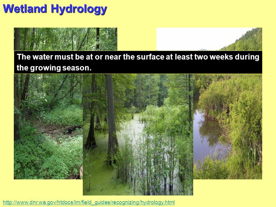 Wetland Hydrology T.