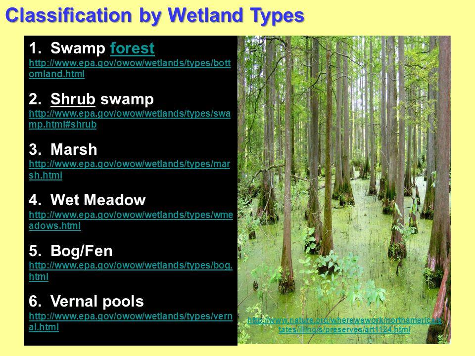 Classification by Wetland Types 1. Swamp forest http://www.epa.gov/owow/wetlands/types/bott omland.htmlforest http://www.epa.gov/owow/wetlands/types/b