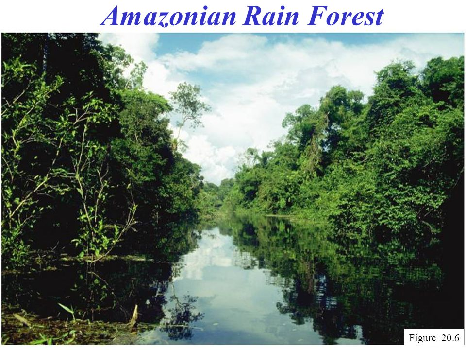 Amazonian Rain Forest Figure 20.6