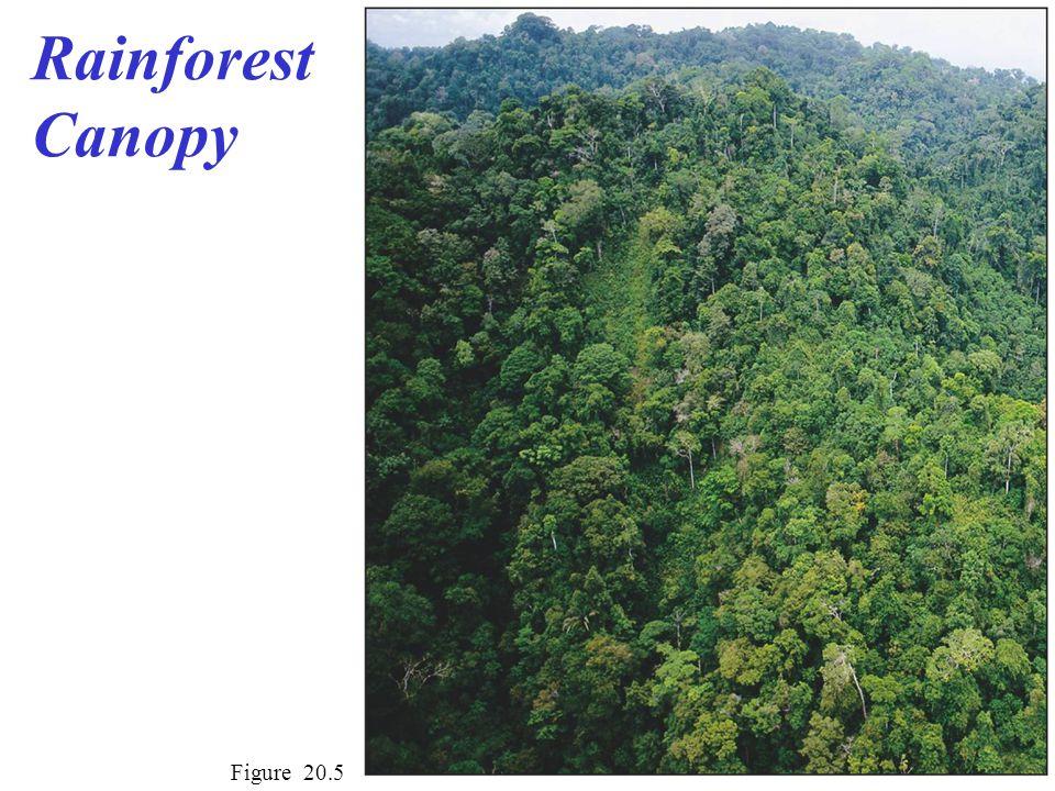 Rainforest Canopy Figure 20.5