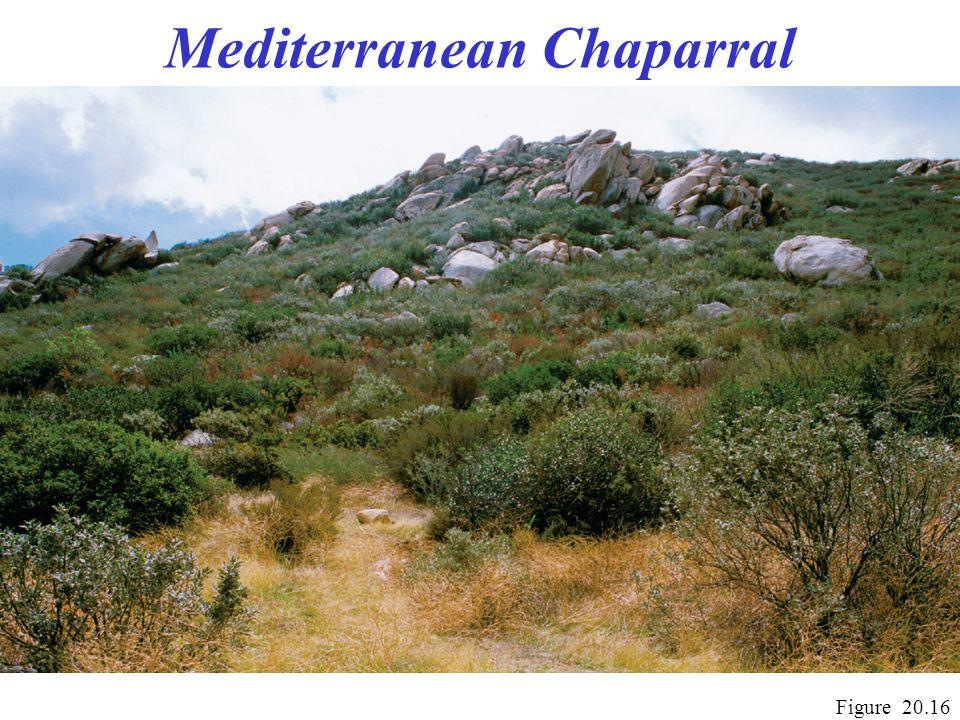 Mediterranean Chaparral Figure 20.16