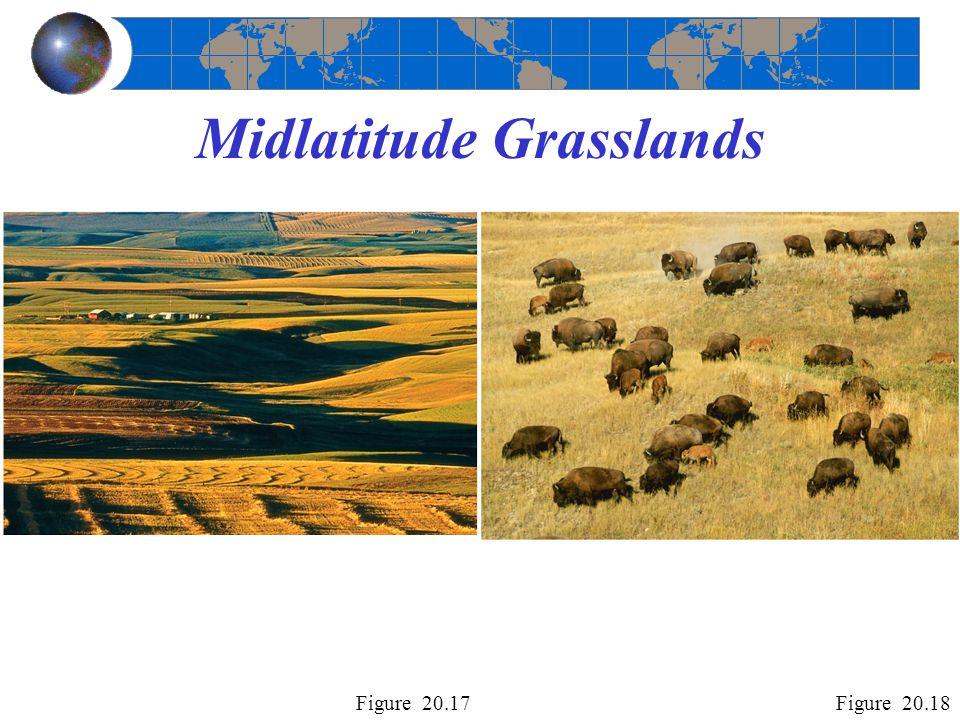 Midlatitude Grasslands Figure 20.17Figure 20.18