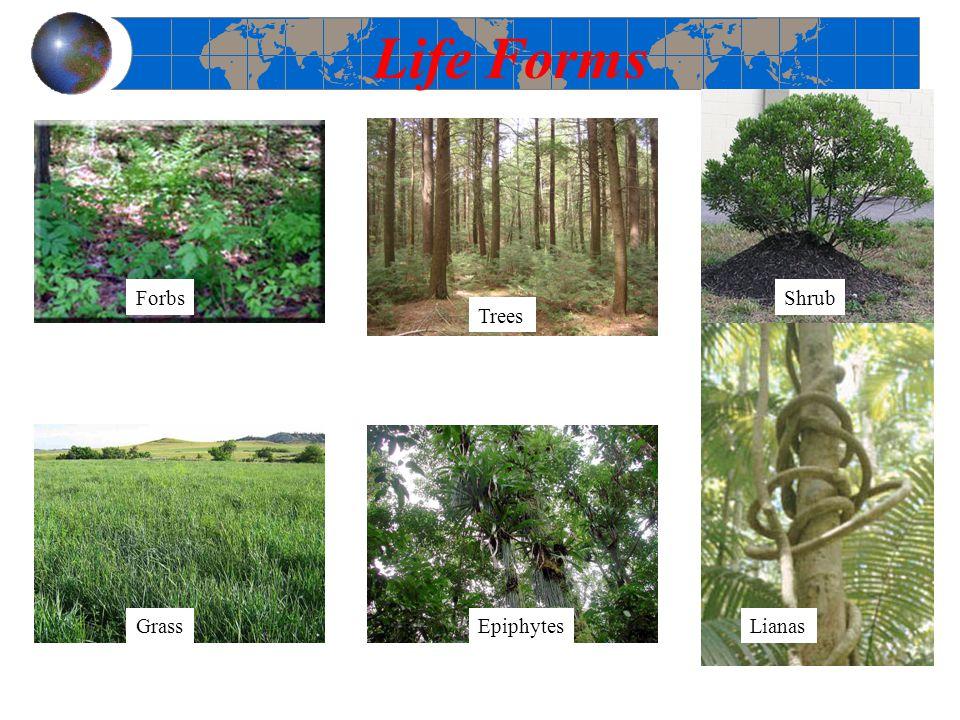 Life Forms Forbs Grass Trees Epiphytes Shrub Lianas