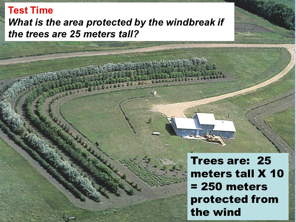 Test Time What is the area protected by the windbreak if the trees are 25 meters tall.