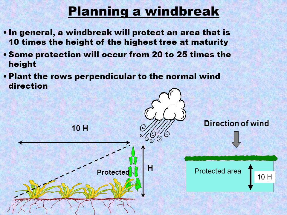 In general, a windbreak will protect an area that is 10 times the height of the highest tree at maturity Some protection will occur from 20 to 25 time