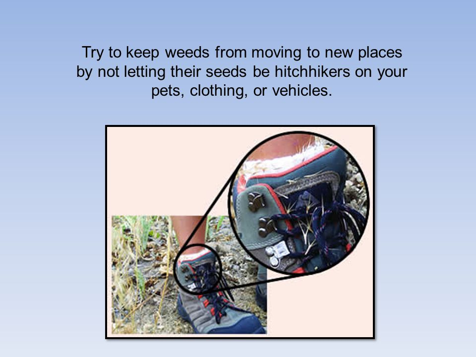Try to keep weeds from moving to new places by not letting their seeds be hitchhikers on your pets, clothing, or vehicles.
