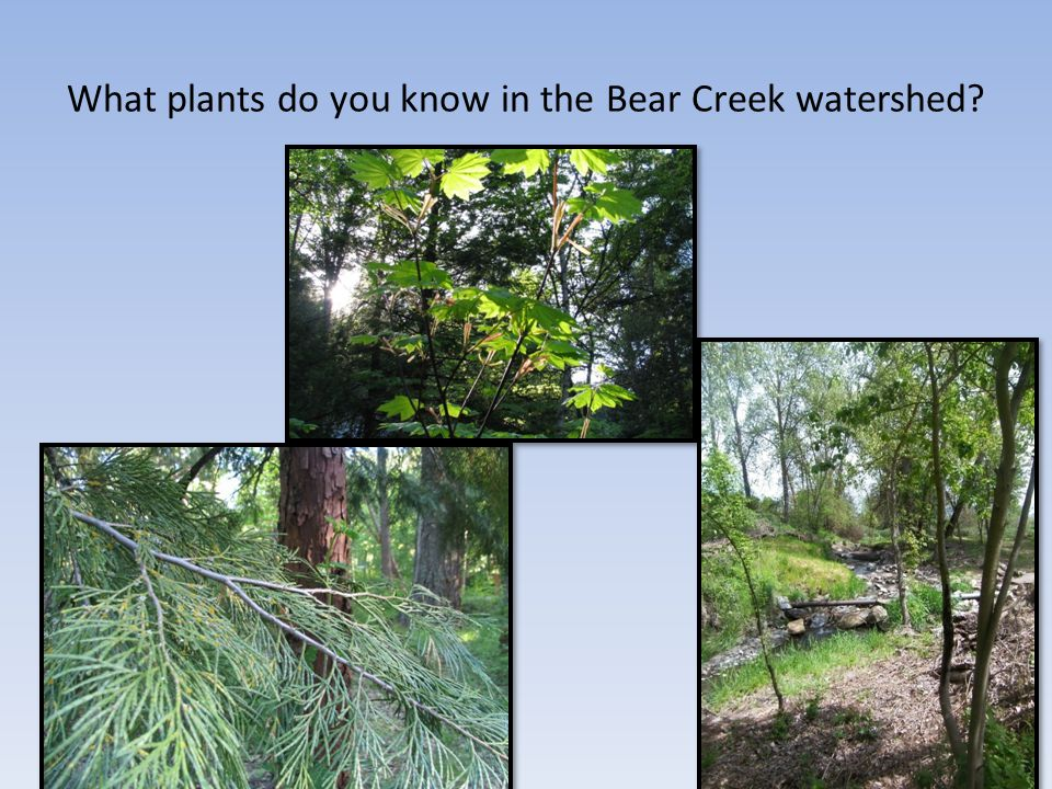 What plants do you know in the Bear Creek watershed