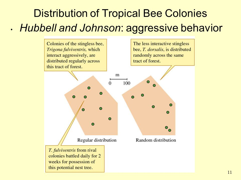 11 Distribution of Tropical Bee Colonies Hubbell and Johnson: aggressive behavior